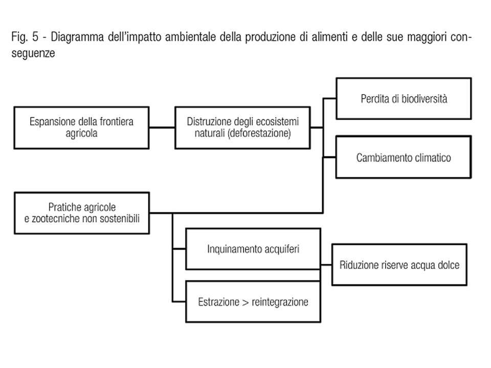 Impatto ambientale produzione alimenti