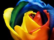 15-sementes-de-rosa-arco-iris-raras-frete-gratis-327801-MLB20416686155_092015-F