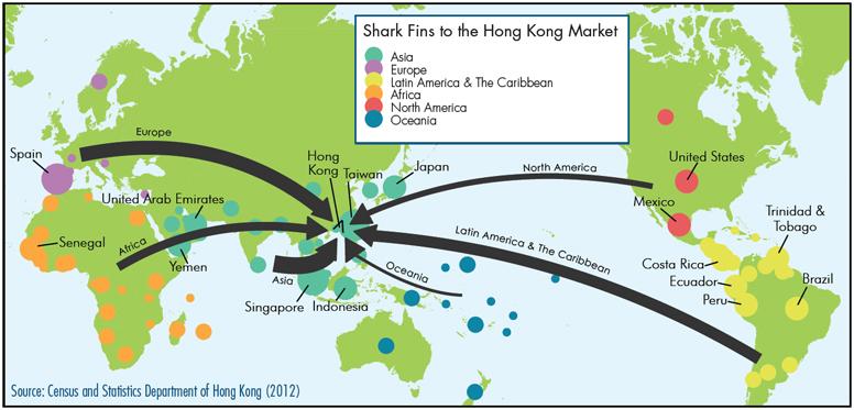 shark-fins-to-hong-kong