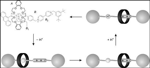 Figura 4. Una 'navetta' molecolare azionata da protoni.