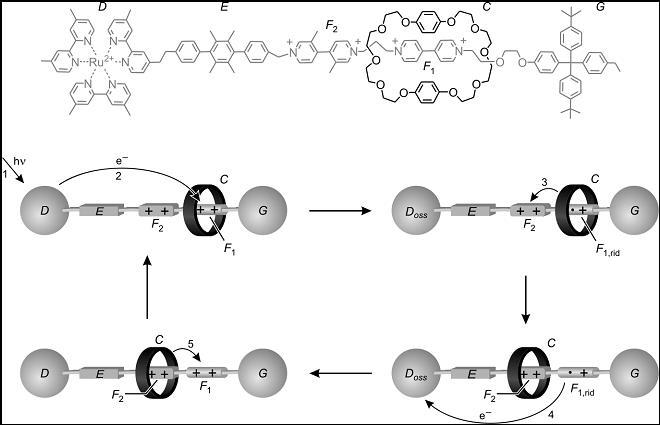 Figura 5. Una 'navetta' molecolare controllata da energia luminosa.