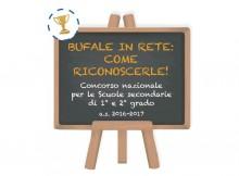 concorso bufale