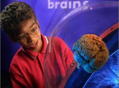 Brain, Il mondo in Testa