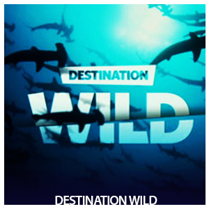 destionationwild