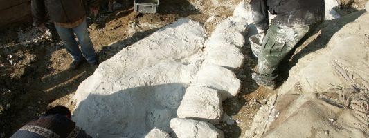 Una balenottera fossile a Matera: com' è stato possibile?