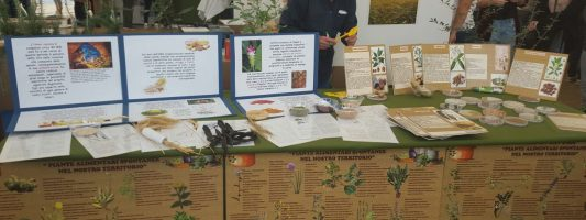 Le piante officinali come rimedi medici naturali