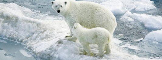 Gli effetti del riscaldamento globale ai poli