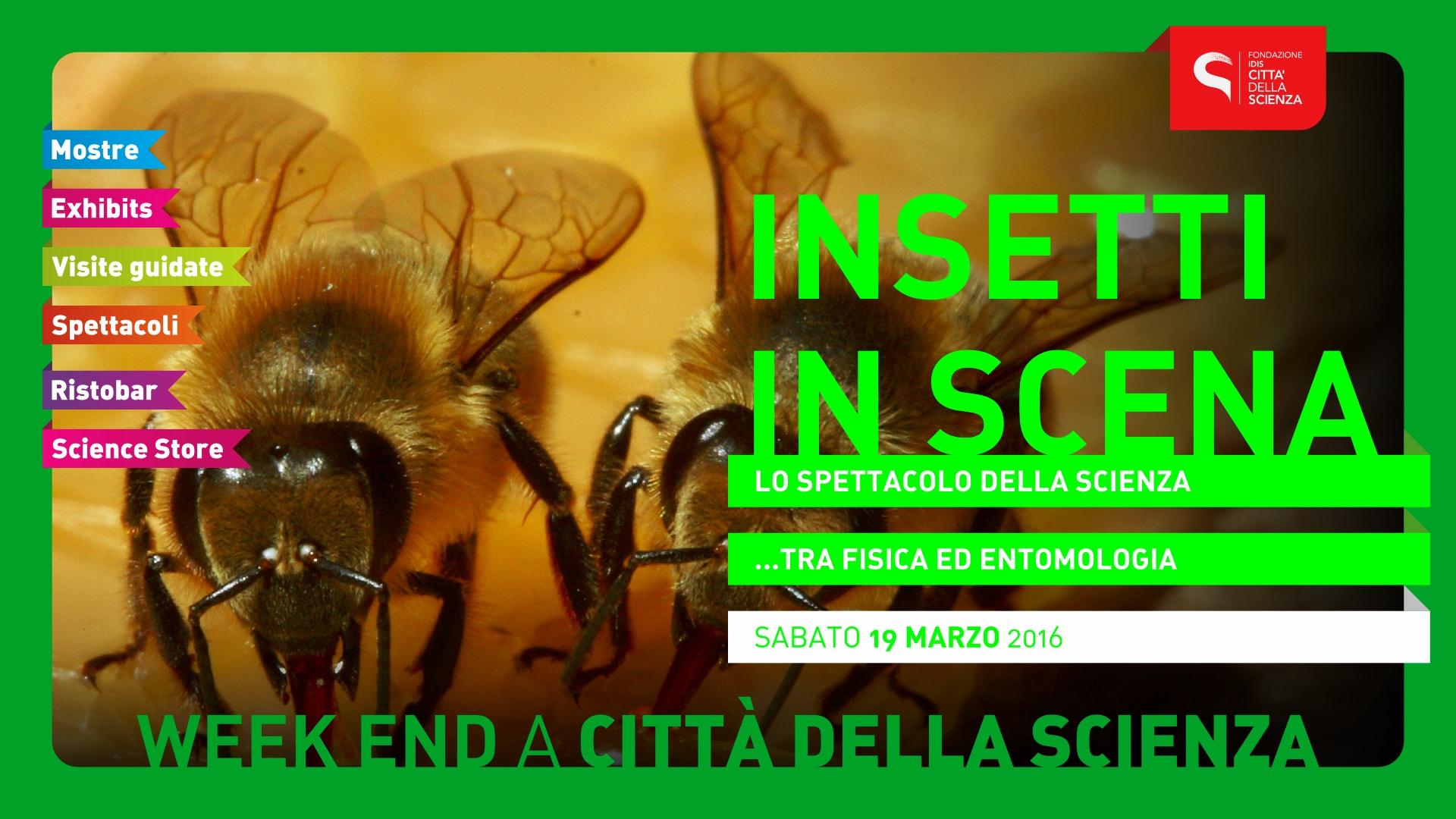 002_INSETTI_IN_SCENA_1920_x_1080-min