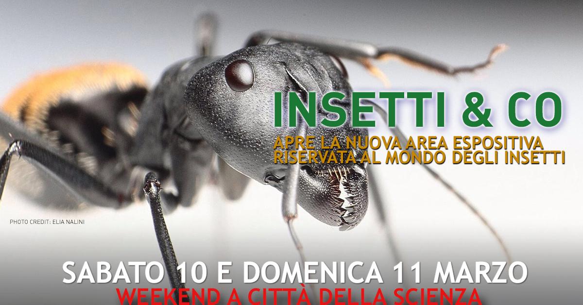 1200x628 apertura mostra insetti e co 10 - 11 marzo a città della scienza