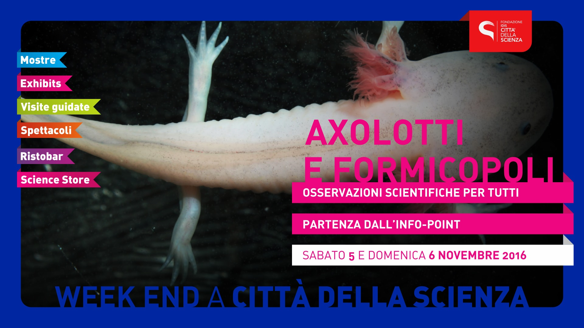 AXOLOTTI-weekend-novembre