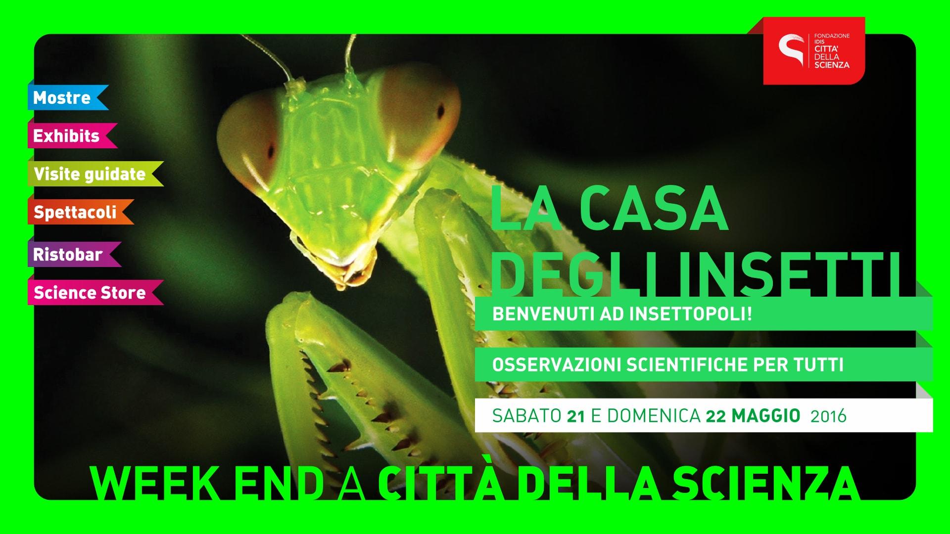 CASA_DEGLI_INSETTI