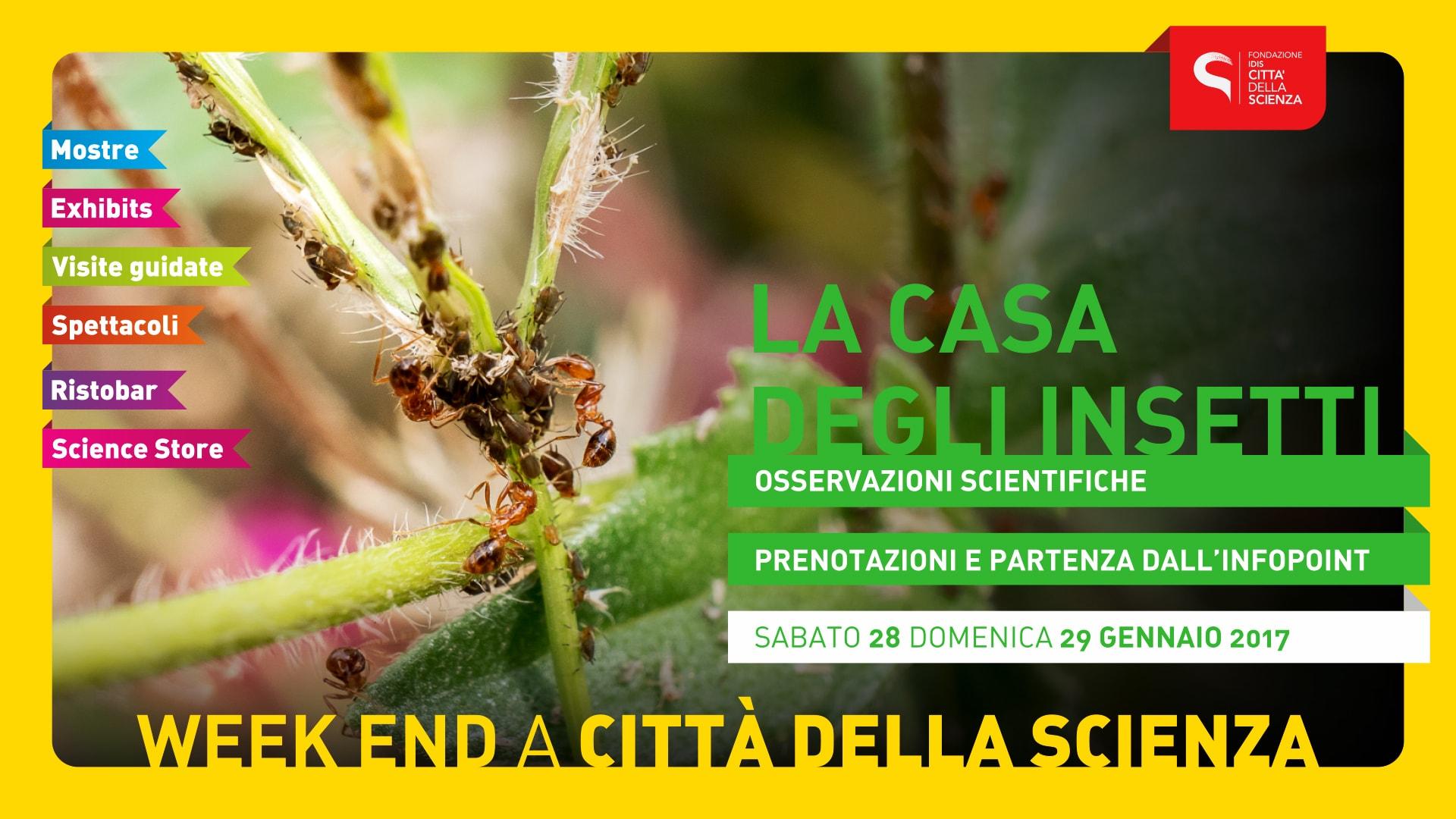 CASA_DEGLI_INSETTI_1920_x_1080-min