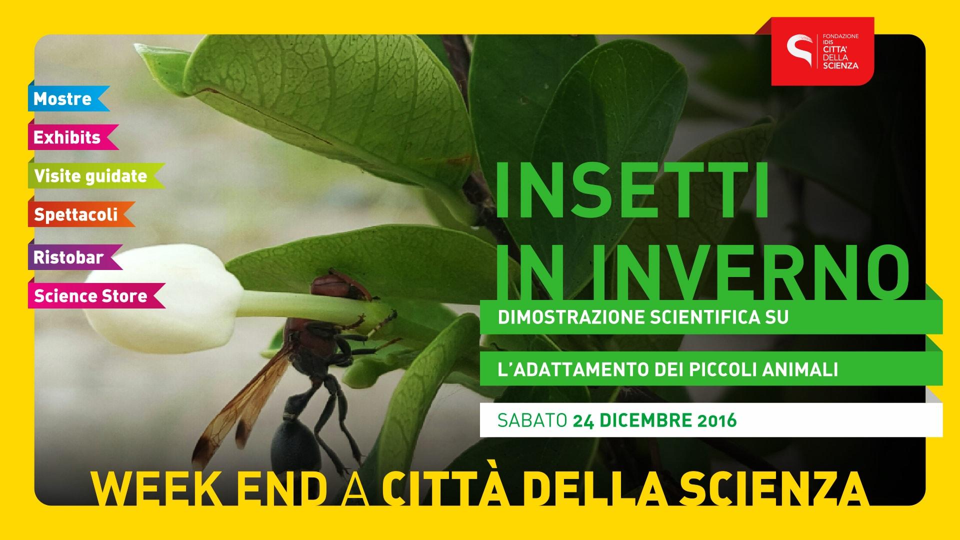INSETTI_IN_INVERNO
