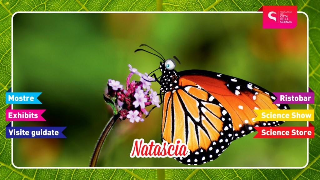 INSETTOPOLI_SHOW_Natascia