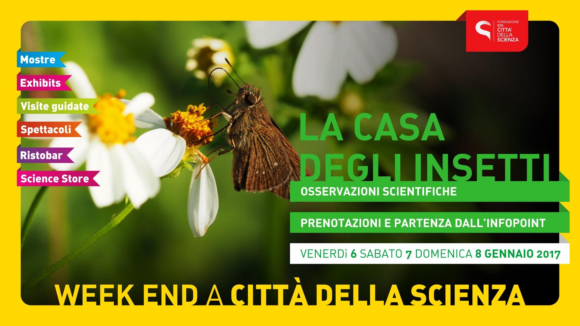 LA_CASA_DEGLI_INSETTI
