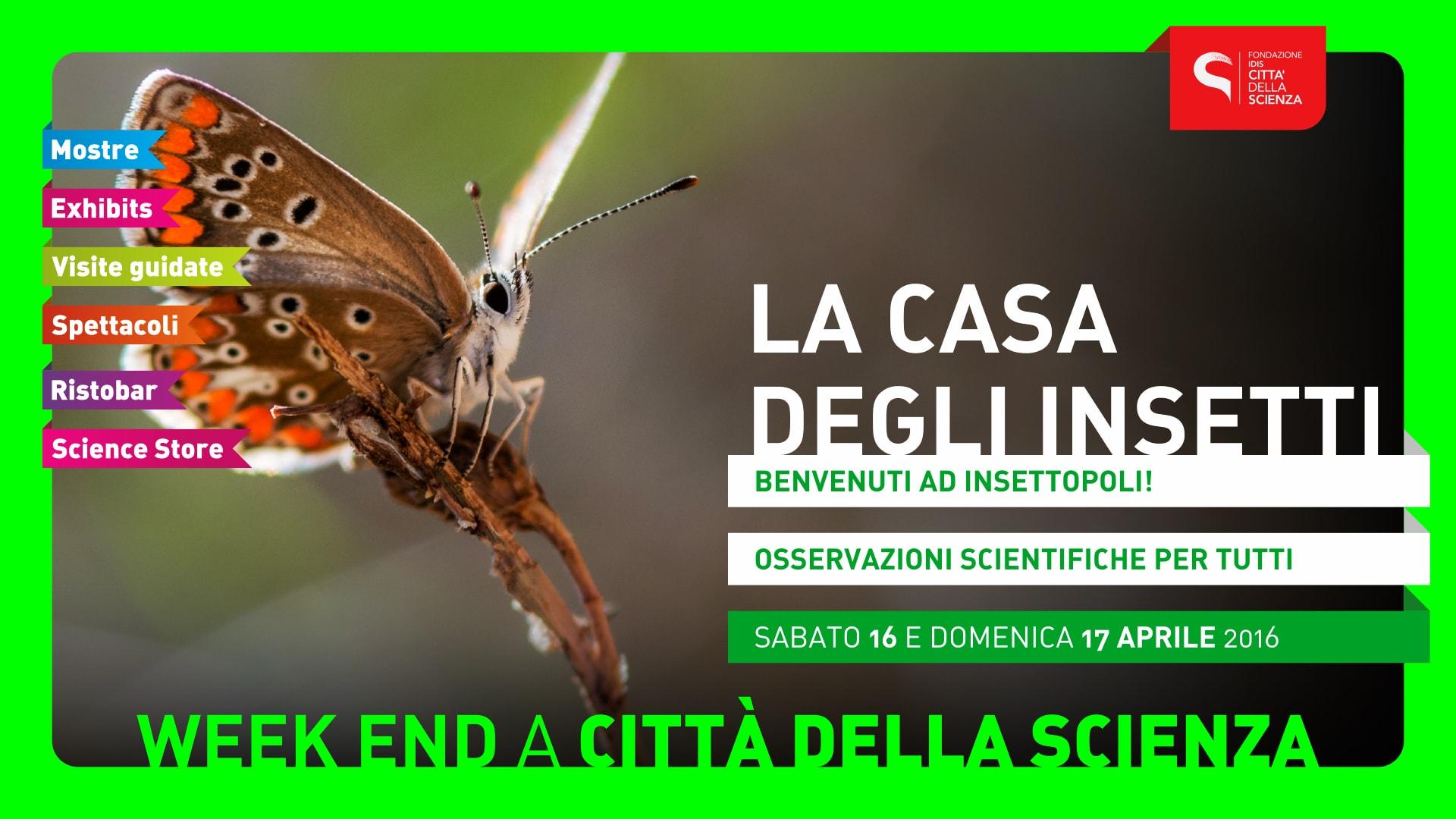 LA_CASA_DEGLI_INSETTI_1920_x_1080-min