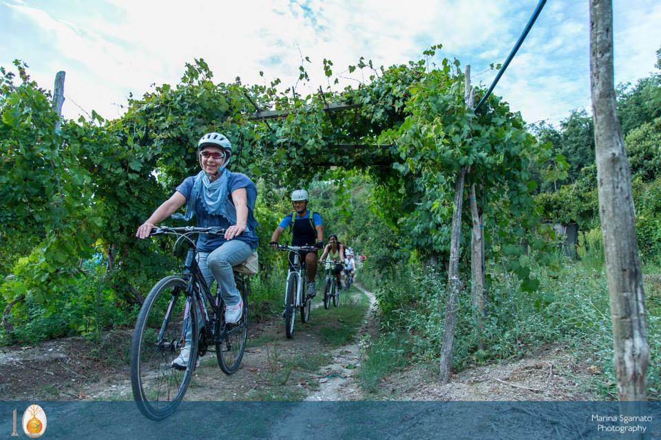 Le vie del Vino flegree con Malazè