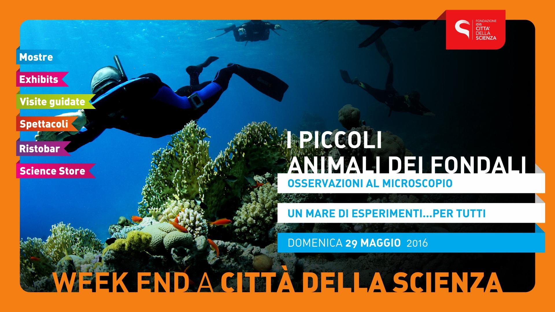 PICCOLI_ANIMALI_DEI_FONDALI_1920_x_1080_px-min