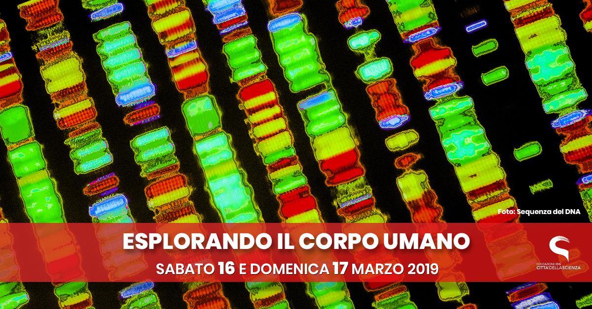 esplorando il corpo umano_16_17 marzo 2019 a Città della Scienza_ITA