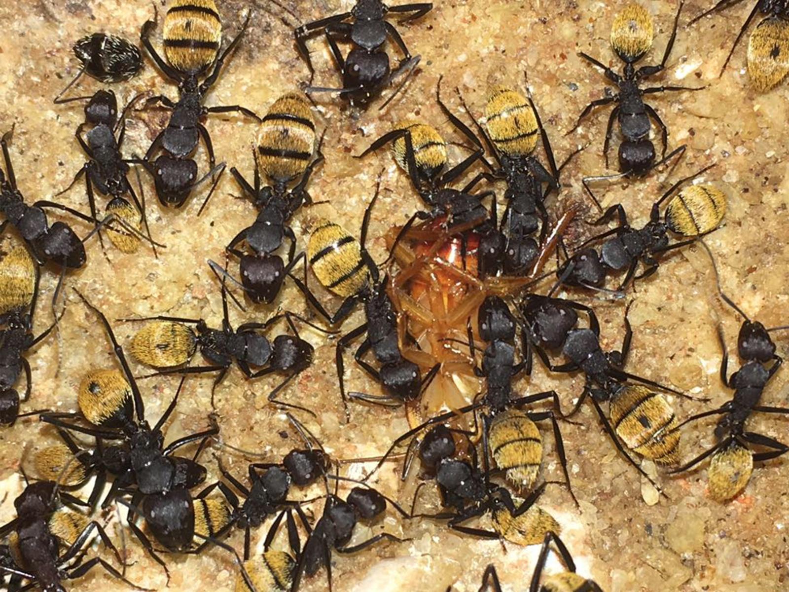 formiche città della scienza